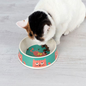 Chester Cat Food Bowl