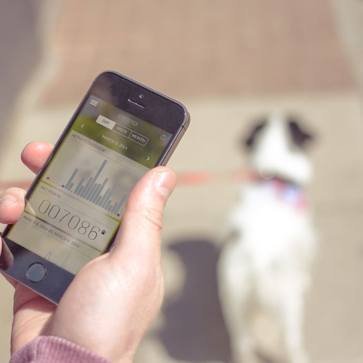 MOTION: Pet Activity Tracker