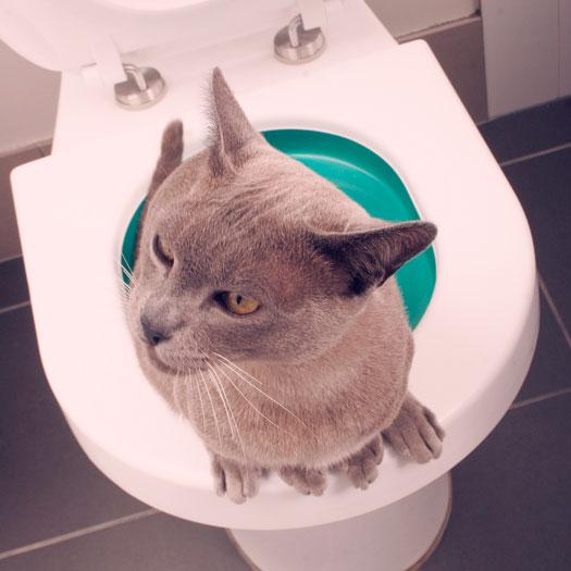 Litter Kwitter WC Training für Katzen