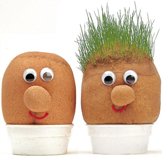 Mr Grasshead Graskopf