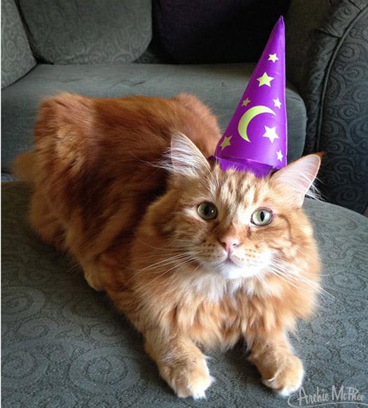 Magierhut für Katzen