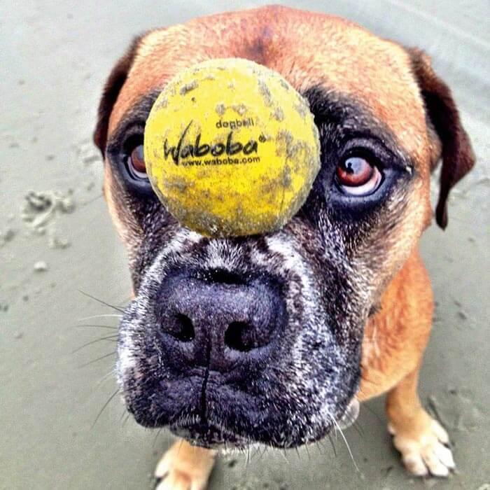 Waboba Hunde-Spielball