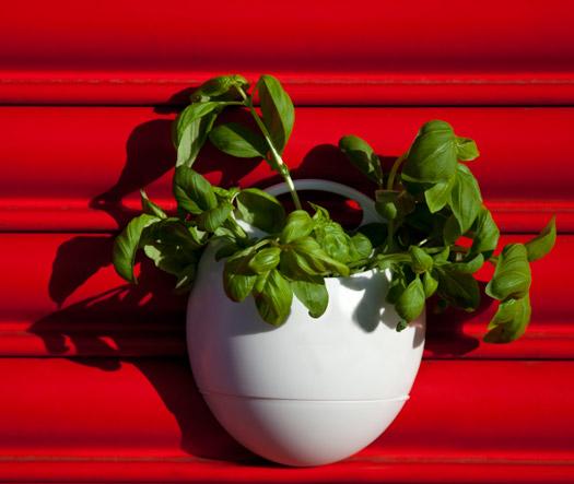 Eco Pod - Der selbstbewässernde Blumentopf