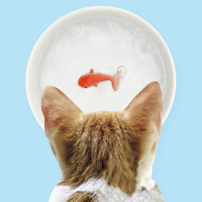 Fish Pet Bowl