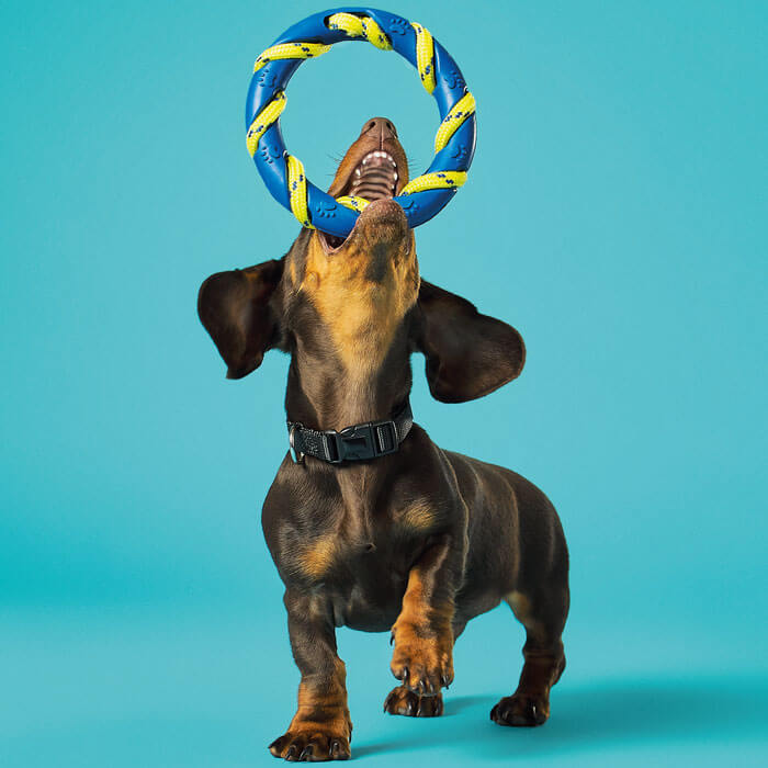 Dog Toy Jump & Catch