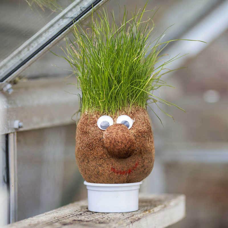 Mr Grasshead