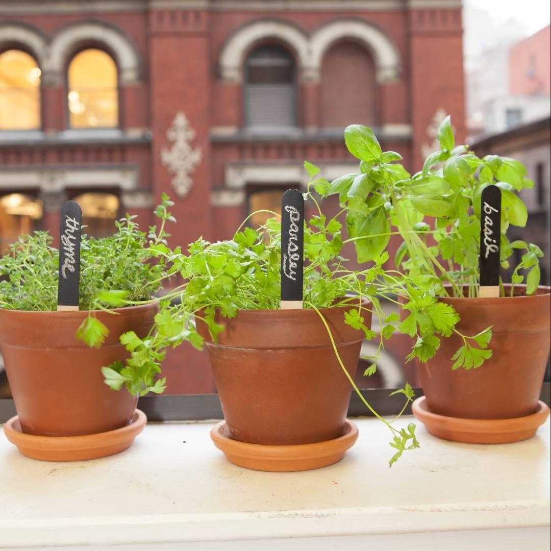 Reusable Garden Markers