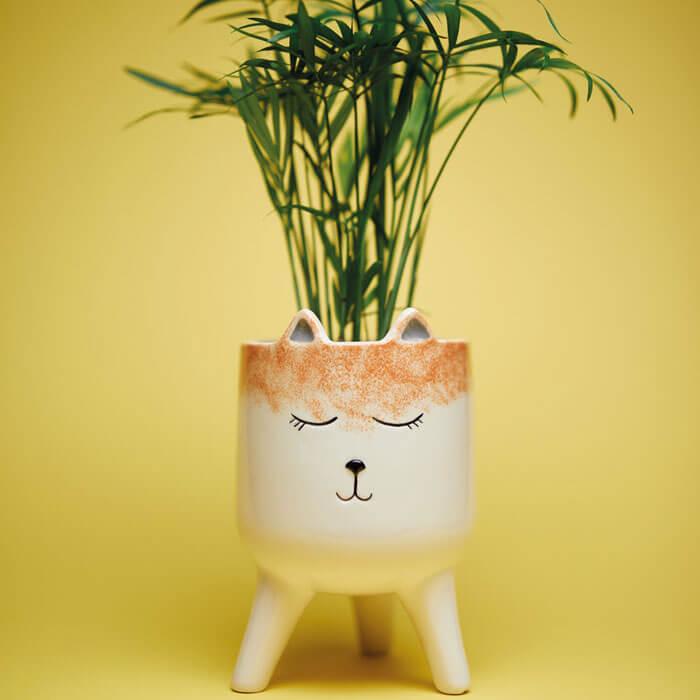 Fox Planter