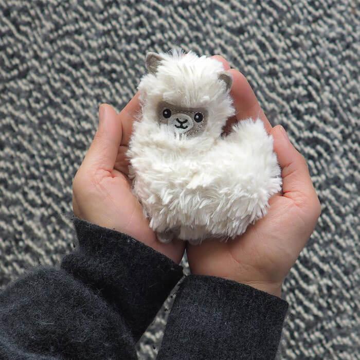 Pocket Pal Llama