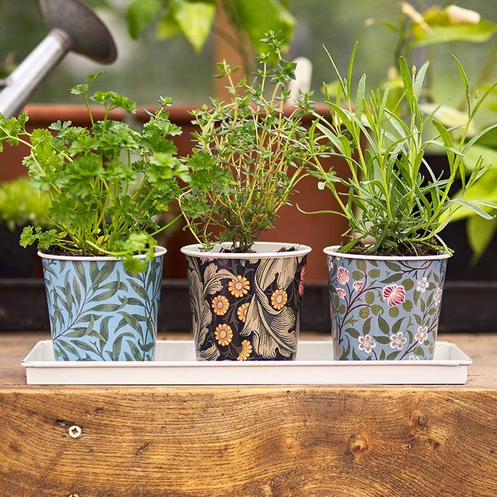 Set of 3 Plant Pots With Tray